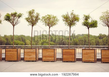 Trees In Pots On The Street