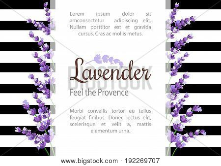 Lavender Card with flowers. Vintage Label with provence violet lavender. Background design for natural cosmetics beauty store health care products perfume essential oil wedding background.