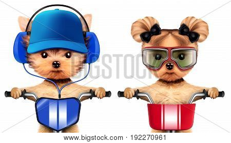 Funny animal sitting on a bike and wearing headphones, aviator glasses and baseball cap, isolated on white. Delivery concept. Realistic 3D illustration of yorkshire terrier