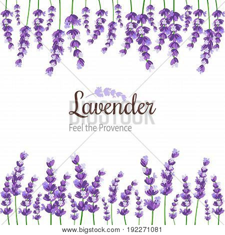 Lavender Card with flowers. Vintage Label with provence violet lavender. Background design for natural cosmetics beauty store health care products perfume essential oil invitations