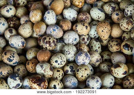 Textured background with small quail eggs. Natural pattern. Horizontal format
