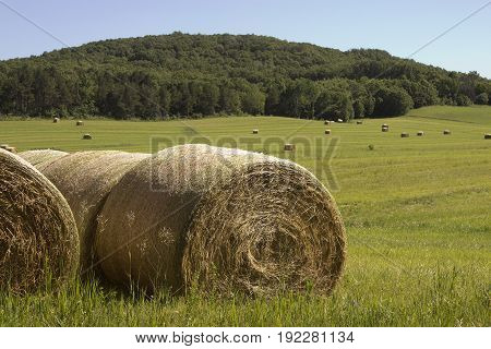 A field of round hay bales on a Wisconsin farm.