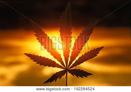 Cannabis Or Marijuana Leaf Silhouette In Sunlight. Marijuana Leaf. Medical Cannabis Plant. Graphic D