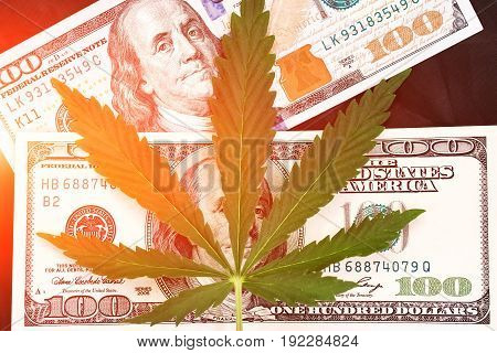 Sheet Of Marijuana In The Sunlight . Money With Marijuana Leaves Close. Hemp With Money. Marijuana L