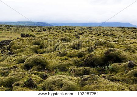 Lava fields overgrown with moss in southern Iceland near Vik