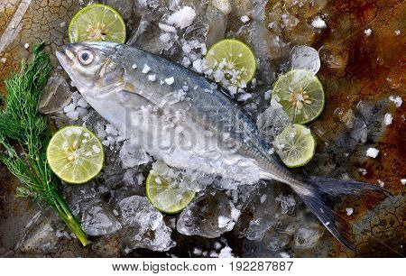 Frozen Fresh Trevally Fish.