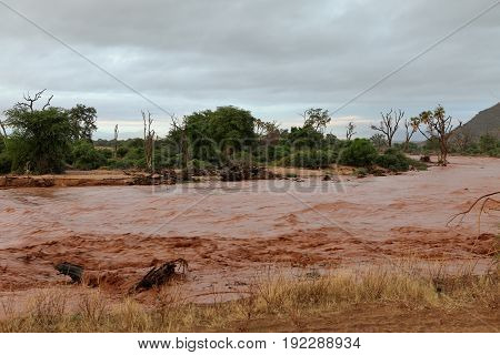 Flood in the Samburu River in the north of Kenya