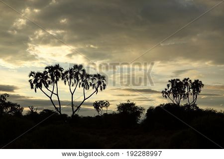 Sunset in the Samburu National Park of Kenya