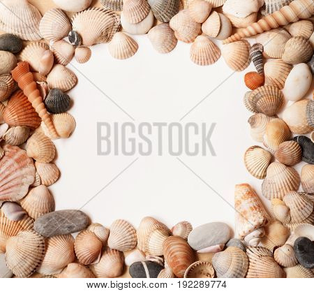 Sea Shell background with space for text. Square.