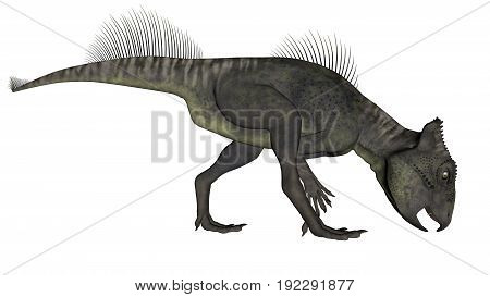 Archaeoceratops dinosaur eating isolated in white background - 3D render