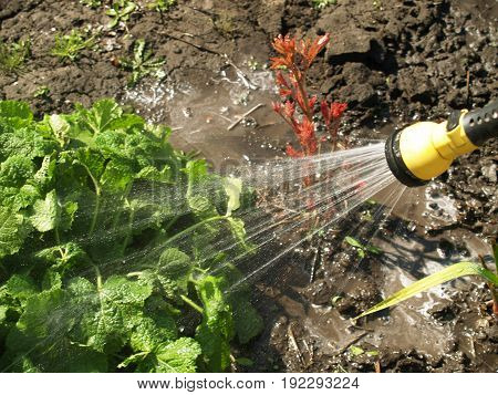 Manual watering from which flows water irrigated land