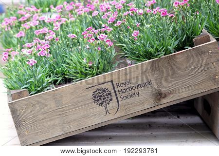 Wisley, Surrey, Uk - April 30 2017: Box Of Pink Carnations Bearing The Emblem And Name Of The Royal