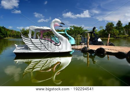 Swan water bicycle floating on the lake in the park photo in outdoor sun lighting with blue sky.