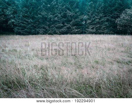 Forest trees and meadow, simple natural background backdrop, without sky, nearly just duo chrome or duotone, two-thirds, big copy space. low contrast in cold tones