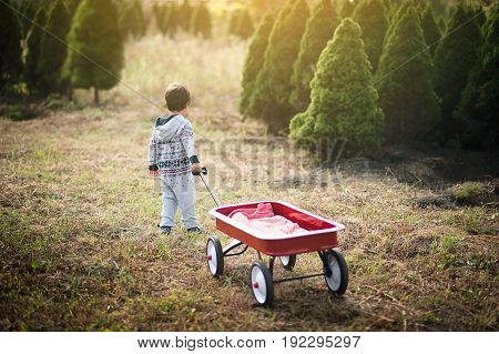Little Boy With Red Wagon