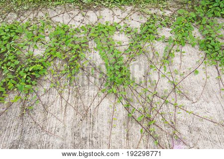 green leaf plant over grunge wall background.