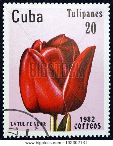 CUBA - CIRCA 1982: a stamp printed in the Cuba shows Tulip Tulipa is a Herbaceous Perennial Bulbous Plant circa 1982