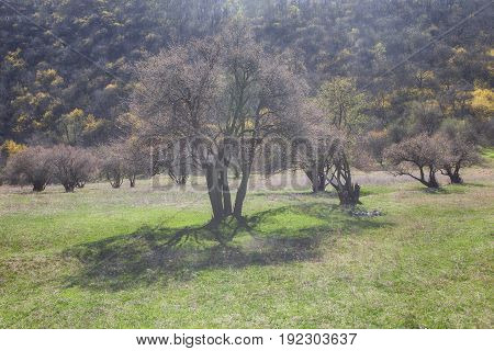 spring scenery with green meadow and trees