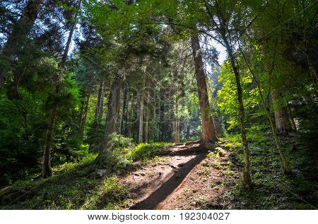 Picturesque path in a sunny summer forest.