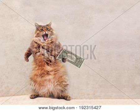 The Big Shaggy Cat Is Very Funny Standing.shelter 11