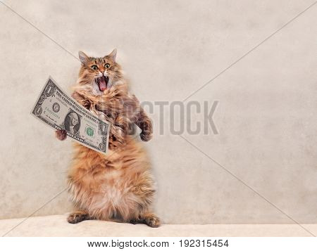 The Big Shaggy Cat Is Very Funny Standing.shelter 2