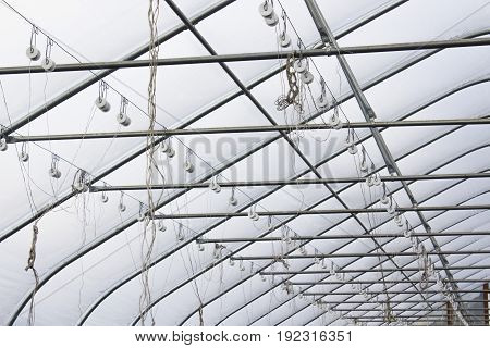 A closeup of greenhouse scaffolding and tomato strings.