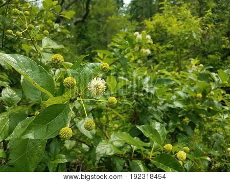 many green plants in a swamp or wetland with white flowers