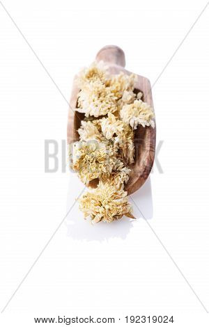 Close-up of dry chrysanthemum flowers on wooden scoop. Healthy herbal tea Isolated on white background