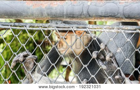 gloom and inactive Langur in the cage in zoo