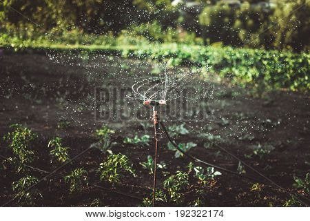 Watering the crop by automatic spraying. Many small drops. Soft Focus