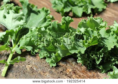 Fresh leaf of kale cabbage on wooden background. Green vegetable leaves. Top view . Healthy eating, vegetarian food .