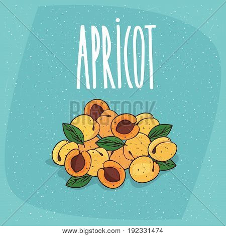 Isolated Ripe Apricots Fruits Whole And Cut