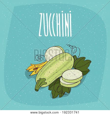 Isolated Vegetable Fruits Courgette Or Zucchini
