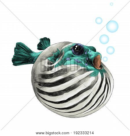 fish arothron bubble inflated sketch vector graphics color picture