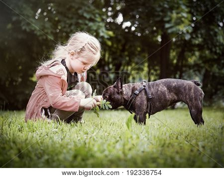The child shows the dog a sprig of the plant. Girl and bulldog on the lawn in the Park