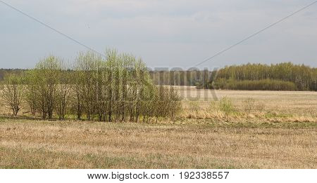 Landscape of an early spring field with dry herbs and budding trees