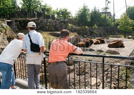 People Looking At A Buffalo Herd In The Zoo