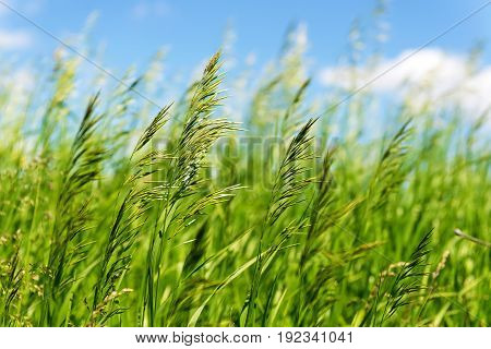 Bright vibrant green grass close-up against the background of the blue sky