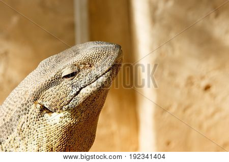 Side View Of A Lizard Head In The Air