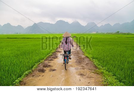 Local woman on her bicycle along a rice field in Bac Son, Vietnam