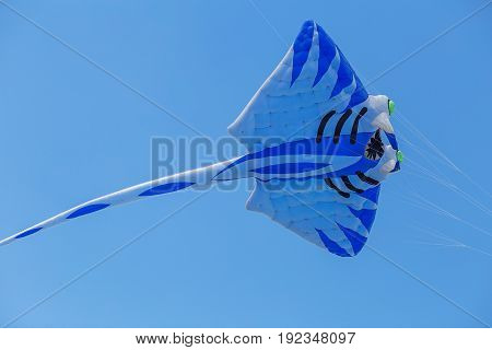 Kites Flying In A Blue Sky. Kites Of Various Shapes.