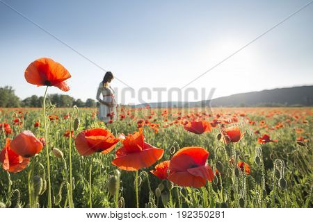Young pregnant woman walking in the poppy field