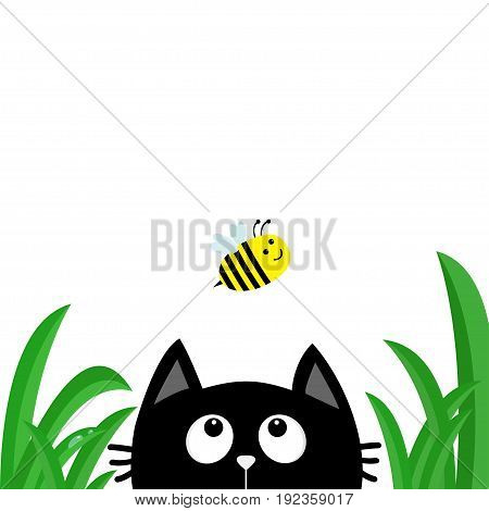 Black cat face head silhouette looking up to flying bee. Green grass dew drop. Cute cartoon character. Kawaii animal. Baby card. Pet collection. Flat design style. White background. Isolated Vector