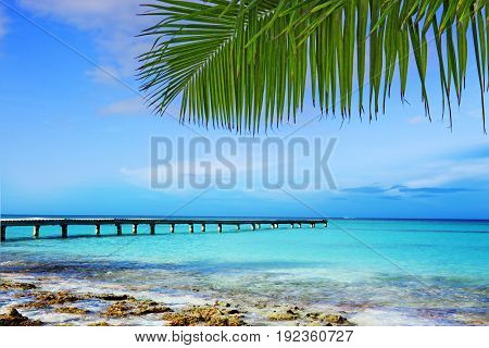 Beautiful caribbean sea and green palm leaves . Summer ocean landscape as background.