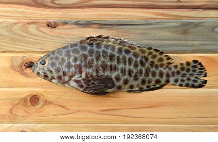 Fresh Grouper Fish For Cooking