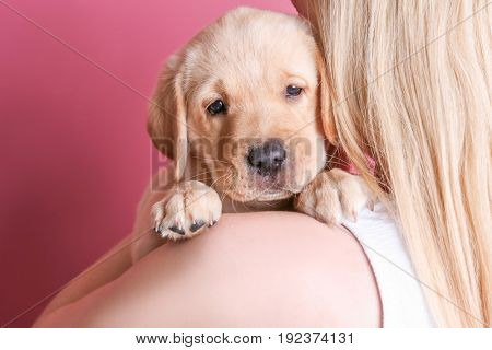 Young woman with cute labrador retriever puppy on color background, closeup