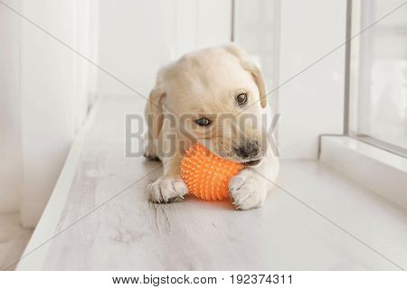Cute labrador retriever puppy playing with rubber ball while lying on window sill at home poster