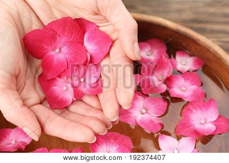 Female hands with hortensia flowers above bowl of aroma spa water, closeup