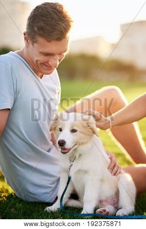 Cute fluffy border collie puppy and his owner in a park at sunset