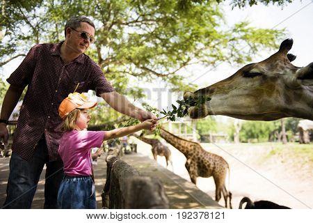 Young caucasian girl feeding the giraffe at the zoo